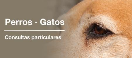 Consultas particulares: Atención personalizada para mascotas no convencionales.