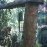 Enriquecimiento ambiental y entrenamiento en El Bosque_Yolcati_0186