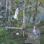 Enriquecimiento ambiental y entrenamiento en El Bosque_Yolcati_0231