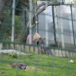 Enriquecimiento ambiental y entrenamiento en El Bosque_Yolcati_0233