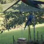 Enriquecimiento ambiental y entrenamiento en El Bosque_Yolcati_0259