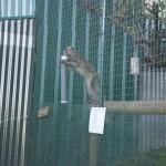 Enriquecimiento ambiental y entrenamiento en El Bosque_Yolcati_0264