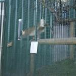 Enriquecimiento ambiental y entrenamiento en El Bosque_Yolcati_0271