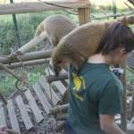 Enriquecimiento ambiental y entrenamiento en El Bosque_Yolcati_0278
