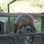 Enriquecimiento ambiental y entrenamiento en El Bosque_Yolcati_0292