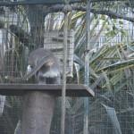 Enriquecimiento ambiental y entrenamiento en El Bosque_Yolcati_0306