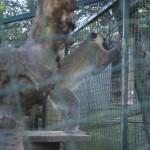 Enriquecimiento ambiental y entrenamiento en El Bosque_Yolcati_0310
