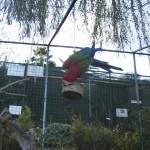 Enriquecimiento ambiental y entrenamiento en El Bosque_Yolcati_0319