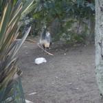 Enriquecimiento ambiental y entrenamiento en El Bosque_Yolcati_0329