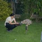 Enriquecimiento ambiental y entrenamiento en El Bosque_Yolcati_0381