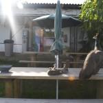 Enriquecimiento ambiental y entrenamiento en El Bosque_Yolcati_0441