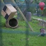 Enriquecimiento ambiental y entrenamiento en El Bosque_Yolcati_0462