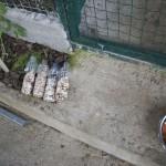 Enriquecimiento ambiental y entrenamiento en El Bosque_Yolcati_0468