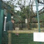 Enriquecimiento ambiental y entrenamiento en El Bosque_Yolcati_0475