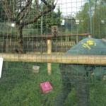 Enriquecimiento ambiental y entrenamiento en El Bosque_Yolcati_0479