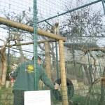 Enriquecimiento ambiental y entrenamiento en El Bosque_Yolcati_0480