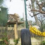 Enriquecimiento ambiental y entrenamiento en El Bosque_Yolcati_0492