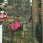 Enriquecimiento ambiental y entrenamiento en El Bosque_Yolcati_0494