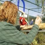 Enriquecimiento ambiental y entrenamiento en El Bosque_Yolcati_0505