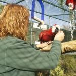 Enriquecimiento ambiental y entrenamiento en El Bosque_Yolcati_0511