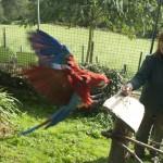 Enriquecimiento ambiental y entrenamiento en El Bosque_Yolcati_0525