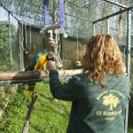 Enriquecimiento ambiental y entrenamiento en El Bosque_Yolcati_0527