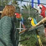 Enriquecimiento ambiental y entrenamiento en El Bosque_Yolcati_0528