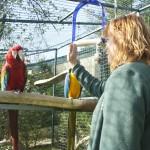 Enriquecimiento ambiental y entrenamiento en El Bosque_Yolcati_0530