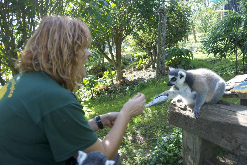 Captura de target con lémures_1
