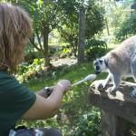 Enriquecimiento ambiental y entrenamiento en El Bosque_Yolcati_0550