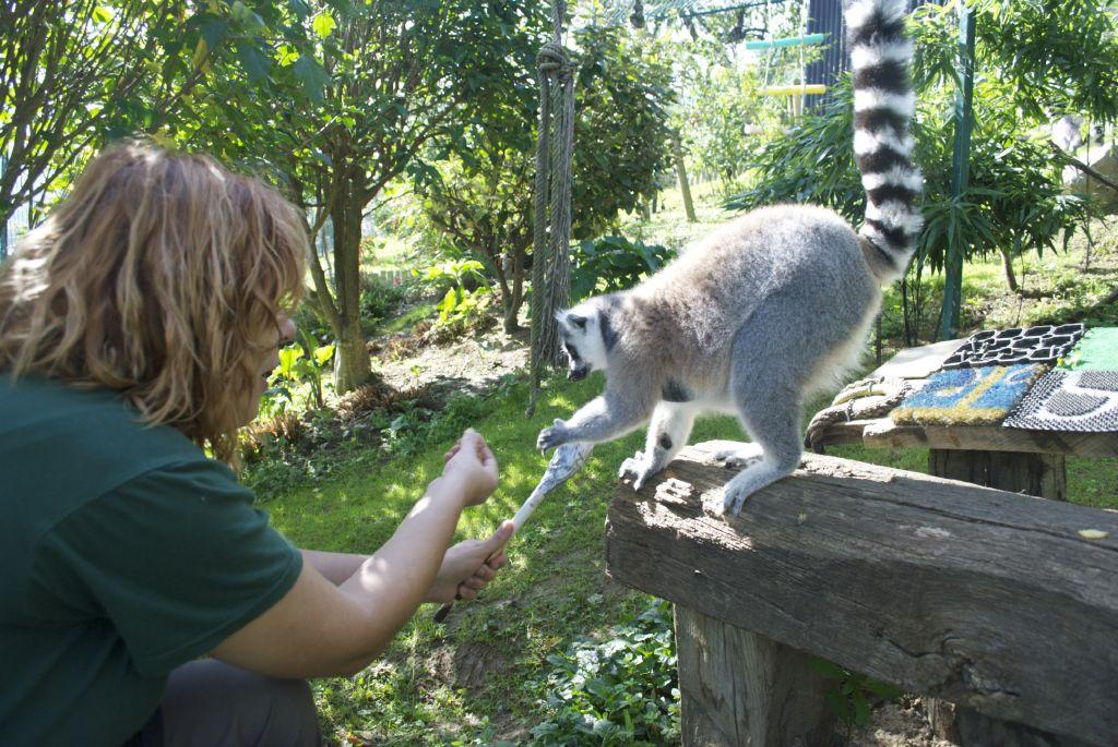 Captura de target con lémures_4