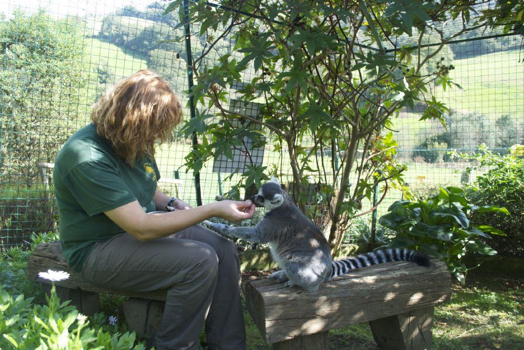 Captura de target con lémures_7