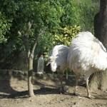 Enriquecimiento ambiental y entrenamiento en El Bosque_Yolcati_0582