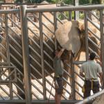 Yolcati y Africam en ZooBCN_17