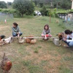 Educación básica. Pontevedra_082