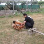 Educación básica. Pontevedra_088