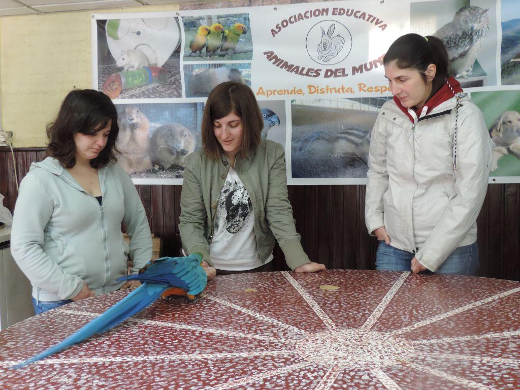 Educación básica. Pontevedra_116