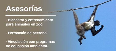 Asesorias - Bienestar y entrenamiento para animales en zoo. - Formación de personal. - Vinculación con programas de educación ambiental.