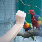 Yolcateando en el Zoo El Bosque_0510