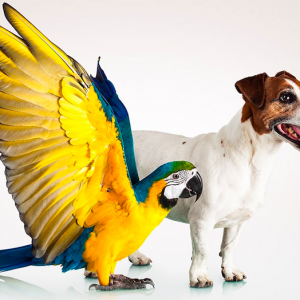 Tiquet consultas veterinarias