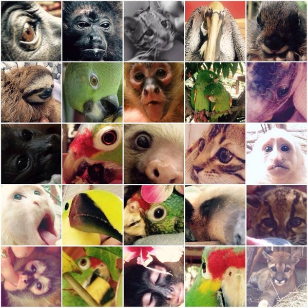 animales_cultura_Yolcati