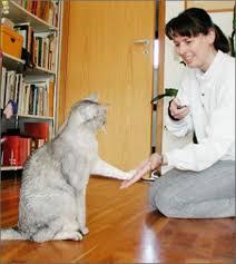 entrenar-gato