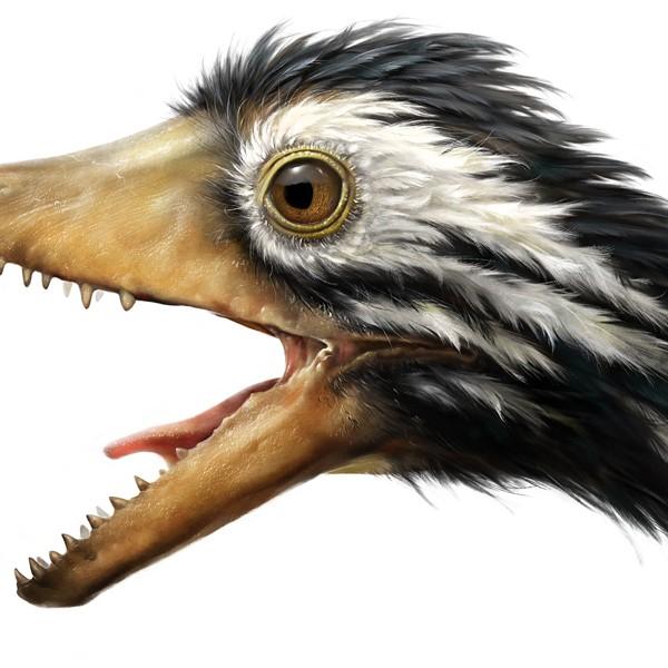 Ilustración de archeopteryx