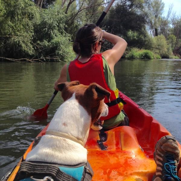 Excursión kayak perro