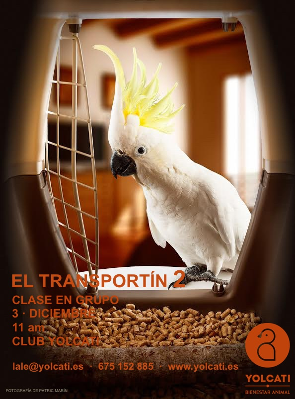 TRANSPORTÍN 2_CARTEL