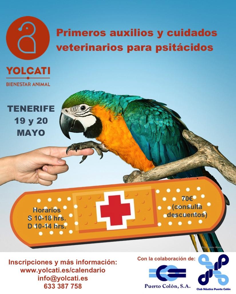 Tenerife. Primeros auxilios y cuidados veterinarios para psitácidos @ CLUB NAUTICO PUERTO COLÓN | Adeje | Canarias | España