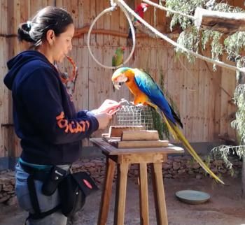 Entrenamiento prácticas veterinarias