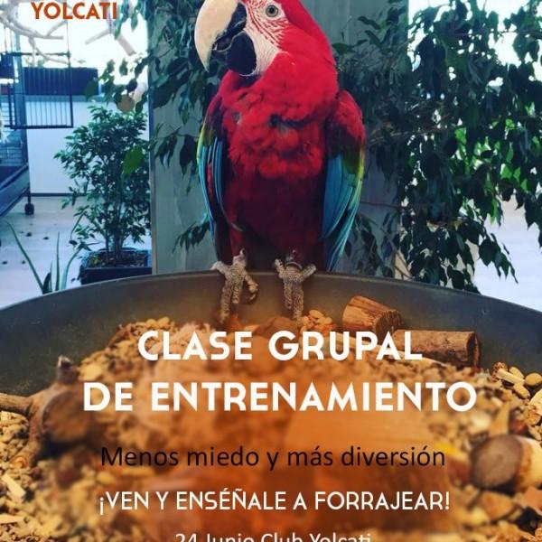Clase grupal de entrenamiento: ¡forrajeo! @ Club Yolcati | Sabadell | Catalunya | España