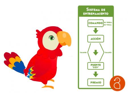 Sistema de entenamiento_libro Yolcati